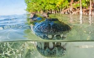 thats a croc
