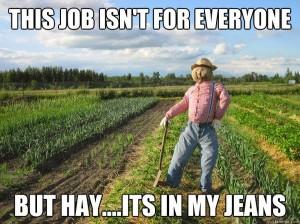 hay-600x449