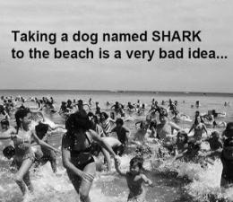 bad dog name