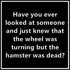 hampster wheel
